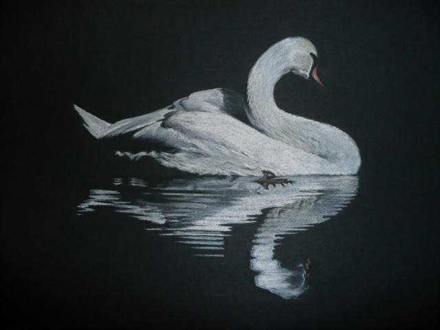 Swan Lake - Pastel