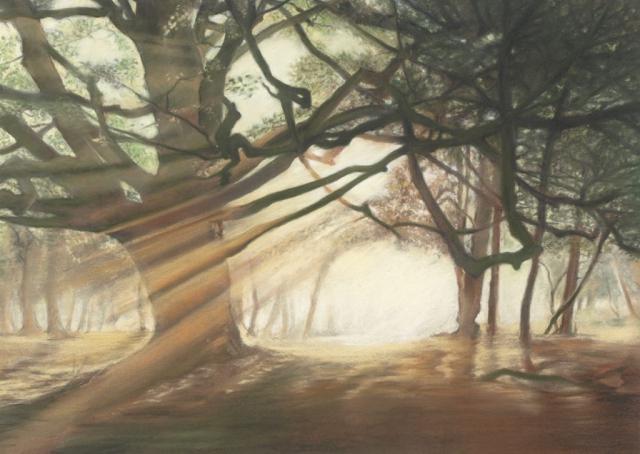 Forest Glade -pastel