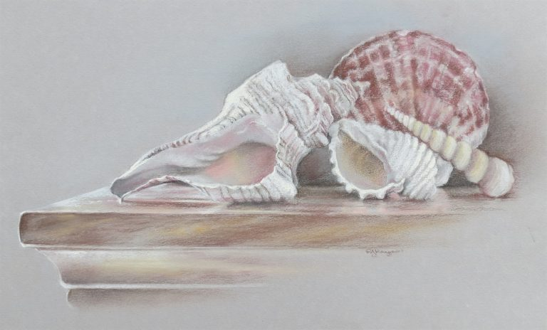 Shell Collection - pastel