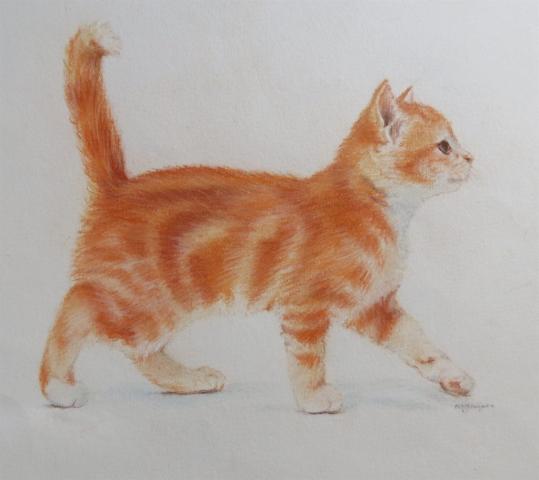 Ginger Kitten - pastel